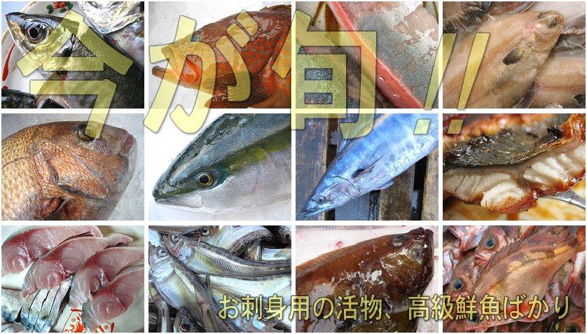 魚海類全品1円スタート