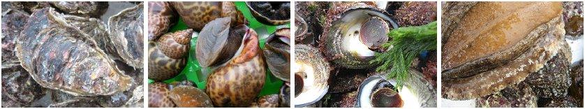 貝類1円スタート