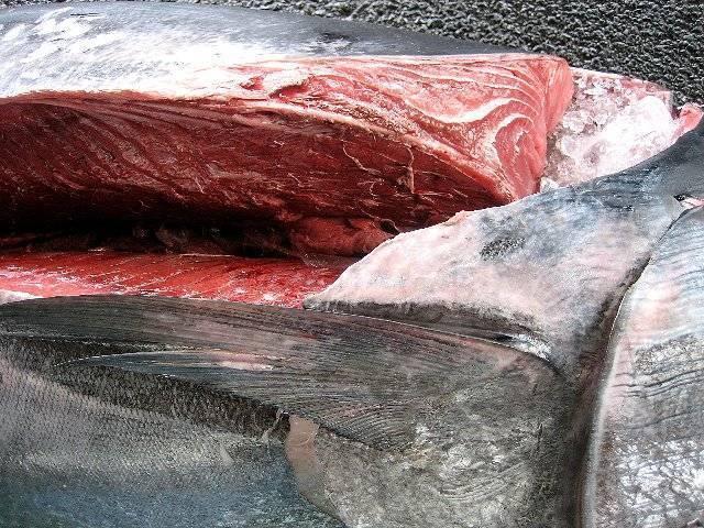 大漁、激安 本まぐろ60kg 極上